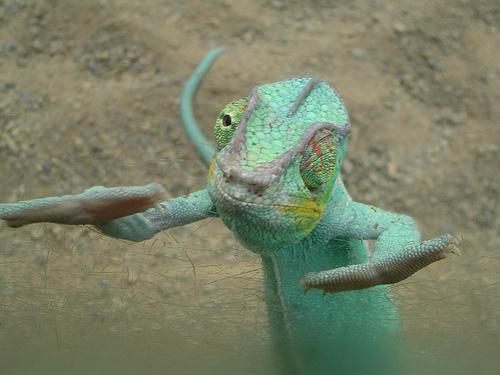 Trippin Lizard