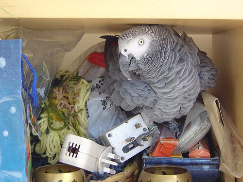 Conrad Cockatoo